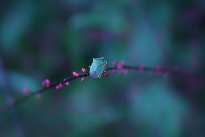 Insect Focus On Foreground Nature Outdoors Close-up Plant Fragility EyeEm Nature Lover Green Creature