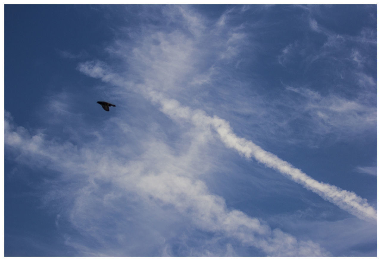 cloud - sky, flying, sky, low angle view, vertebrate, animal themes, bird, animal, animal wildlife, one animal, animals in the wild, no people, nature, auto post production filter, air vehicle, day, mid-air, mode of transportation, transportation, airplane, outdoors, vapor trail, directly below