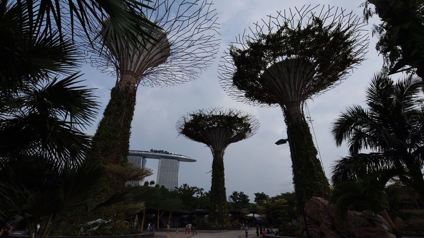新加坡国家植物园