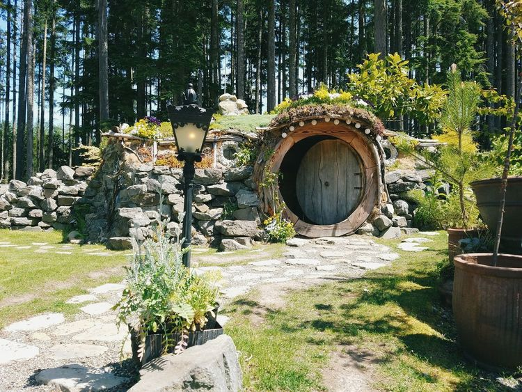 Tree Day Outdoors Growth No People Nature Hobbit House Hobbiton Neighborhood Map