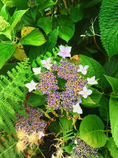 Macro Iphonephotography EyeEm Nature Lover Flowers Nature Portugal