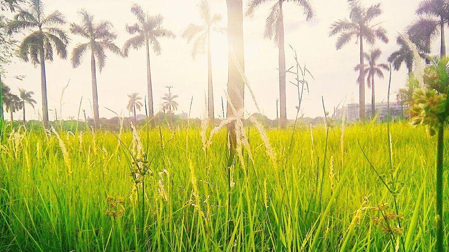 Việt Hưng Viet Nam Green Grass Safe And Sound 12/7/2016