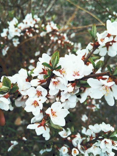 Flower Plant Nature Followme Day Sammer spring sun Green Color Freedom Sky Reshasuper Top