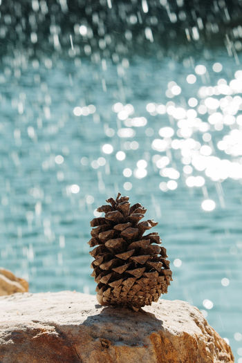 Close-up of pine cone on rock in sea
