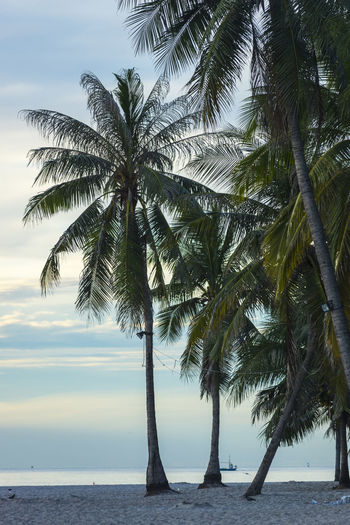 HIN Hua Beach Sunlight Tree Thailand Clear Stone Off Natural Tropical Cloud Fine Rock Day Sand Holiday Bright Shadow Summer Light Swash Morning Level Class Wave Sunday Hua-Hin Pink Azure Time Shade Coconut Blue Long Sky Boat Backwash Sea Water Nature Hotel Ground Side Palm Fishing