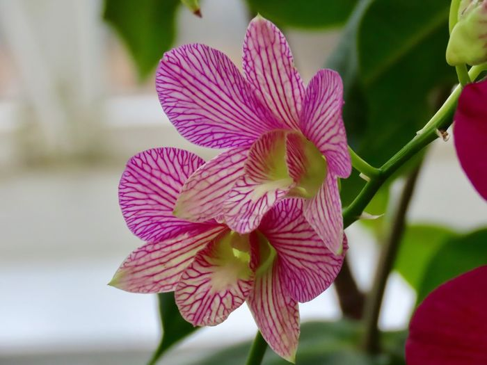 Orchid flowering plant close up striped petals beauty in nature selective focus Plant Flower Growth Focus On Foreground
