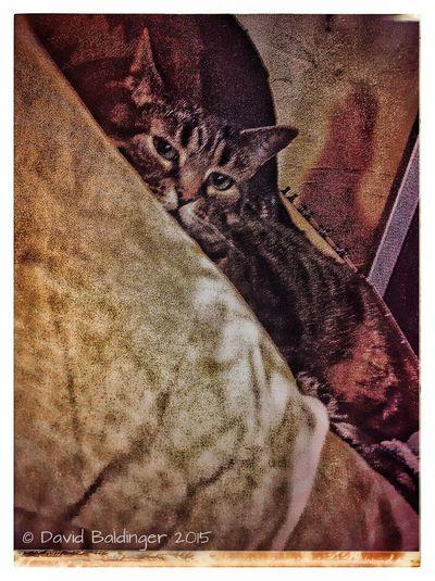 TabbyCat Filter Ilovemycat Catface Pets Katze Snapseed Kitty Love Cat IPadography