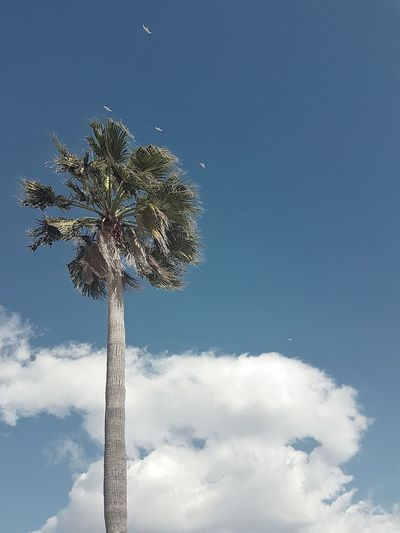 Winter coast ⛅🌴 Perspective Beautiful Minimal Winter Relax Sunny Coast Palm Simplicity Minimalism Highangleview Nopeople Lookingup Palmtree Tall Birds Clouds And Sky Nopeople Relax Calm Sky Cloud - Sky Illuminated Outdoors Day Arts Culture And Entertainment No People Tree Cityscape Nature