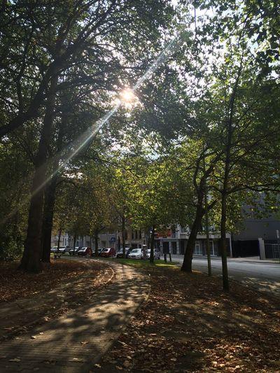 Shadow Trees Sunshine ☀