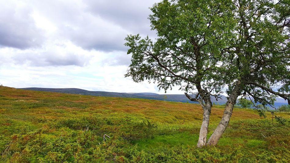 Grövelsjön Silverfallet Nature Nature Photography Naturelovers Eeyem Photography Tree Relaxing Summer