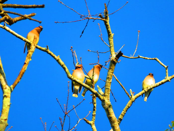 Birds of a feather fly and perch together (rhymes in English) Tropical Climate Tropical Tree Bird Tree Clear Sky Blue Branch Rural Scene Sky Close-up Perching