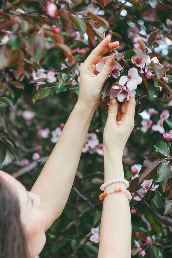 Close-up of hand on cherry blossom