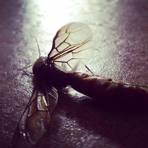 InstaWings Deathofafly Instapropellor Wings