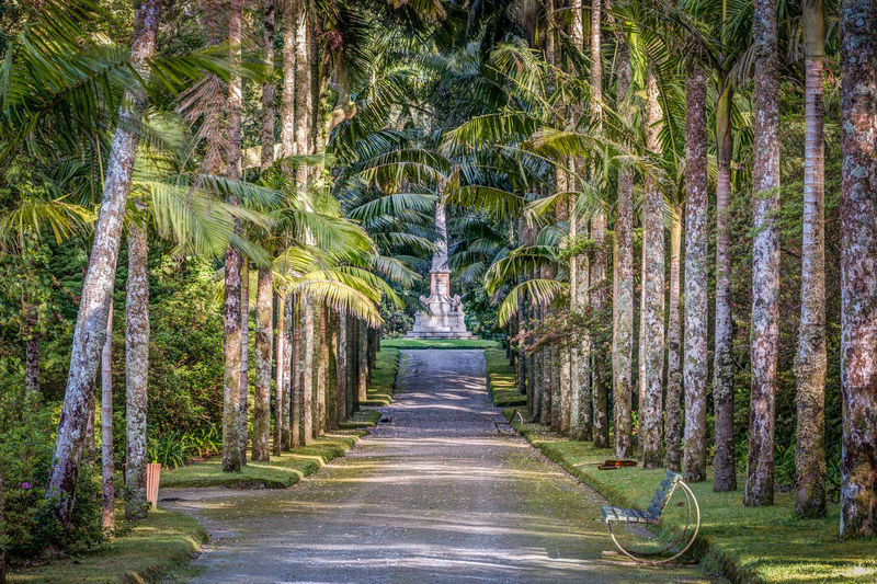 Açores Furnas Memorial Nature Palm Tree Path Portugal Statue Terra Nostra Park Travel Day Direction Footpath Growth Land Nature No People Outdoors Palm Tree Park Plant The Way Forward Tree Treelined Tropical Climate