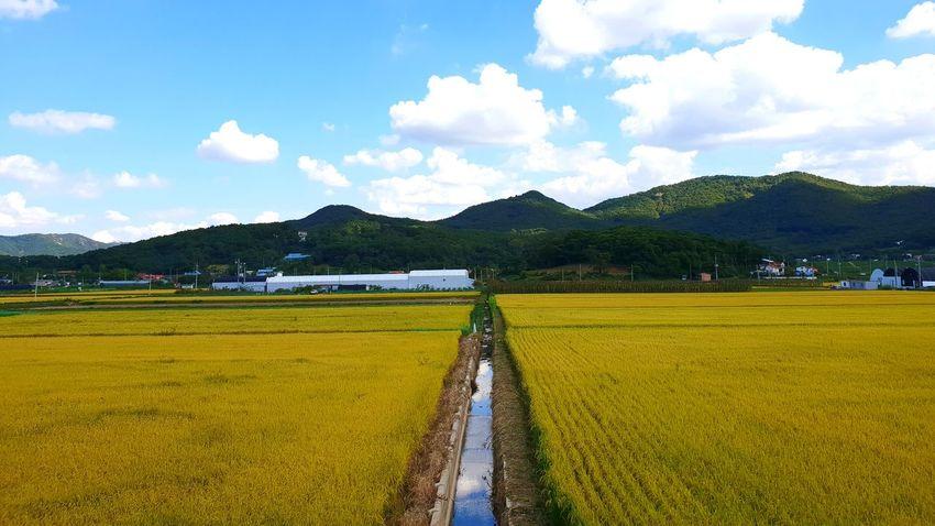 강화도 논 Mountain Cereal Plant Rural Scene Farmer Rice Paddy Flower Agriculture Tree Field Rice - Cereal Plant Calm Terraced Field