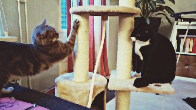 The EyeEm Facebook Cover Challenge Cats Cuties Love