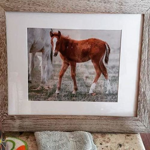 I love when a customer shows the print they ordered from me, in a frame. It makes me happy knowing my images can make others happy! Happiness Wildlifephotography Horse Wild Utah Framed Love