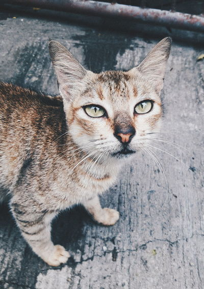 Portrait of stray cat standing on footpath