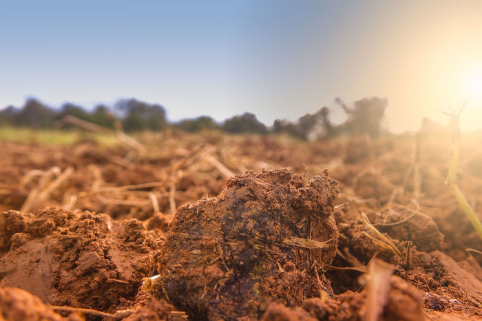 Soil agriculture for grow planting of plant Root Farming Vegetable Land Environment Grow Life Farm Organic Seed Garden Ground Plant Leaf Growing Growth Agriculture Agricultural Land Soil On The Ground Soil