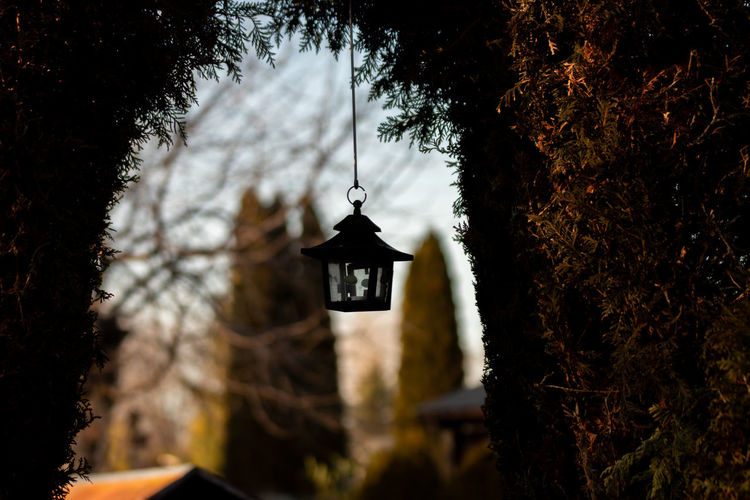 Illuminated electric lamp hanging by tree against building