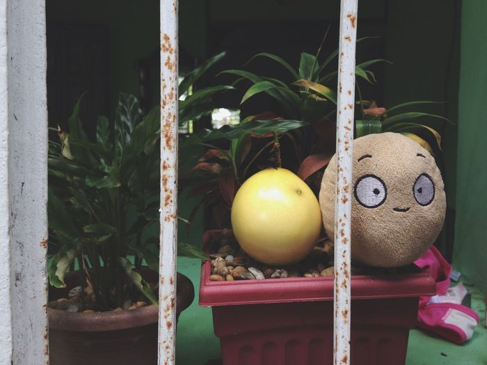 Stuffed toy by passion fruit on potted plant