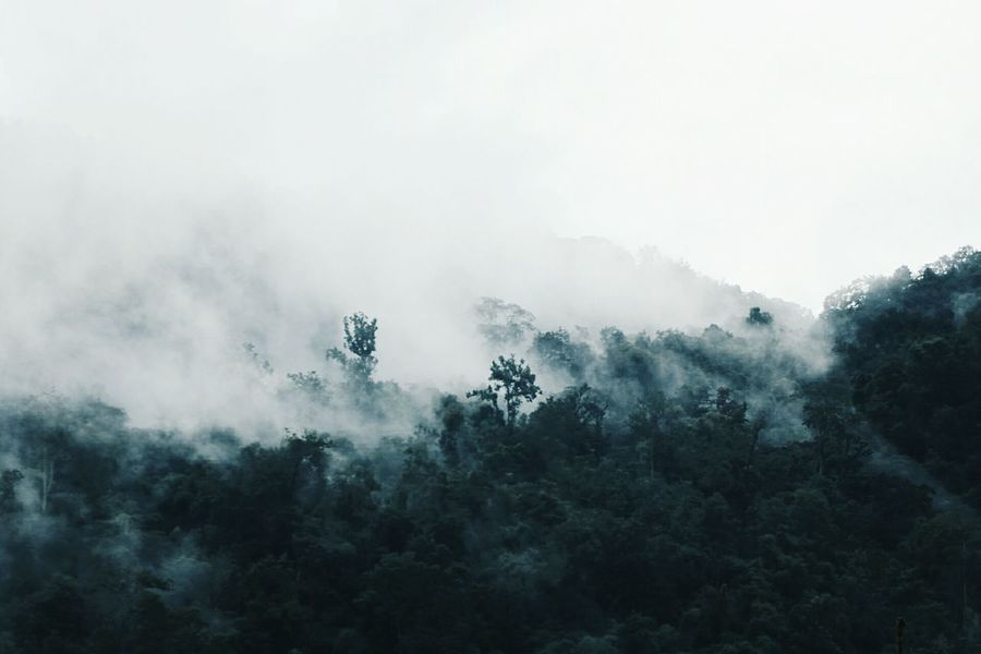 Forest Fog Tree Nature Mountain Landscape Beauty In Nature Rainy Days Afterthestorm  Beutiful Day Chiang Mai | Thailand Nice Atmosphere Spirit Of The Tree Beautiful World 🌍 Mystery Power In Nature