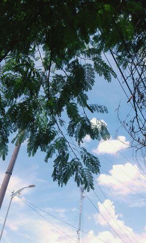 Underthetree