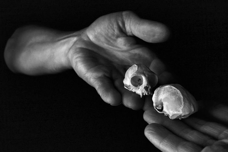 you lookin' at me.......? Taxidermy Marmoset Monkey Skull Reflections Anthropology Simian Primate Bone  Skull Chiaroscuro  Black And White Black And White Photography Human Hand Hand One Person Holding Close-up Black Background