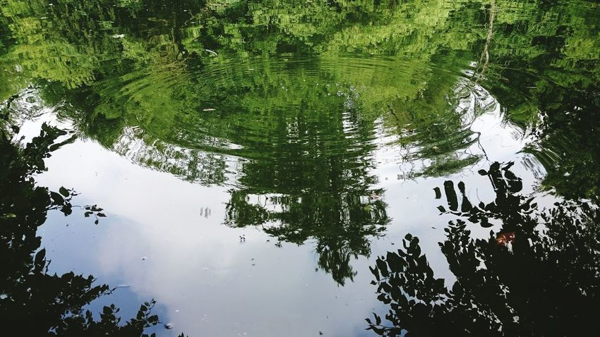 Spiegelbild /// Nature Mirror Water Reflections Green River View Nature_collection