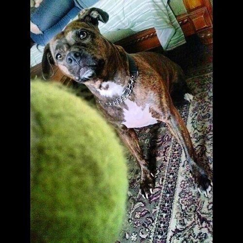 My dogs the doopesstt Kilo Ballfiend