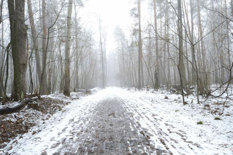 White Spring. Nikon Spring Nature Russia Morning Colors Russia пейзаж утро Landscape снег мгла туман Mist Fog Forest Path Тропа щэдорога Tree Snow Forest Road WoodLand