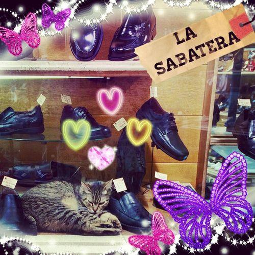 La Gata Zapatera Pet Cat Japan Mascota