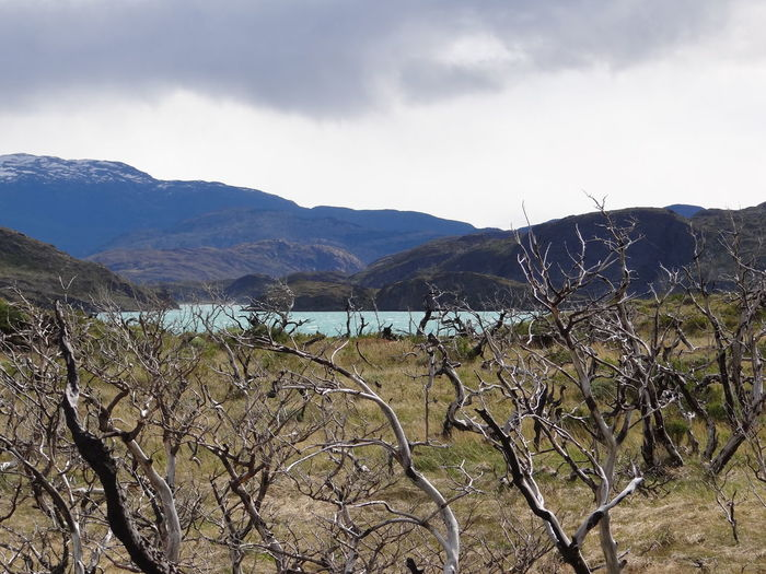 Beauty In Nature Cloud - Sky Day Environment Fence Land Landscape Mountain Mountain Range Nature No People Non-urban Scene Outdoors Patagonia Plant Scenics - Nature Sky Torres Del Paine Tranquil Scene Tranquility Tree Water