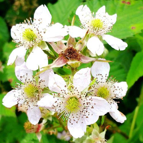 White Flowers Walking Around Martin Mere EyeEm Flower Lovers EyeEm Flowers Collection Eyeem Flower Lover Sunny Day