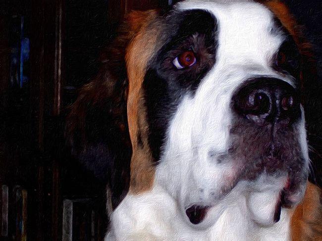 """IPSPaint St. Bernard, """"Belle"""" Mobile Photography TangledFX I Love My Dog"""