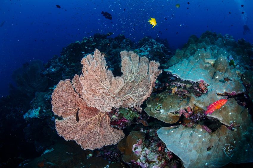 SCUBA Beauty In Nature UnderSea Underwater Sea Coral Nature Sea Life Multi Colored No People Scuba Diving Animals In The Wild Water Outdoors