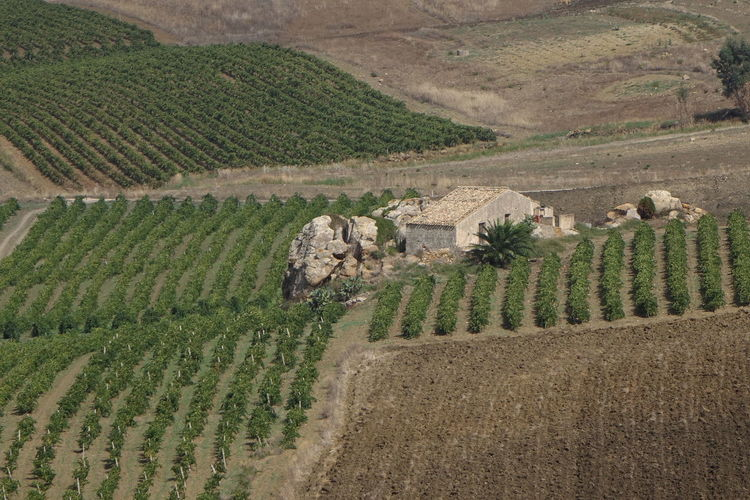 Ancient Homes Rows Of Vines Rural Life Rural Sicily Stone Home Symmetrical Fields Symmetry Fields Vineyards