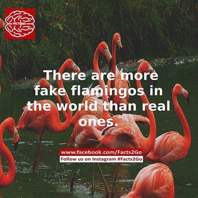 Facts2go Likeforlikes Follow4follow Follow followme like likes photo photooftheday facts go 2 pic picoftheday holiday school college pic lol australia usa
