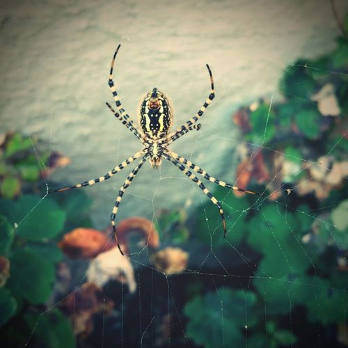 Spider Web Spider Insect Close-up Nature Spiderweb Wildflower Outdoors No People Plant Fragility Web Focus On Foreground Animal Themes First Eyeem Photo