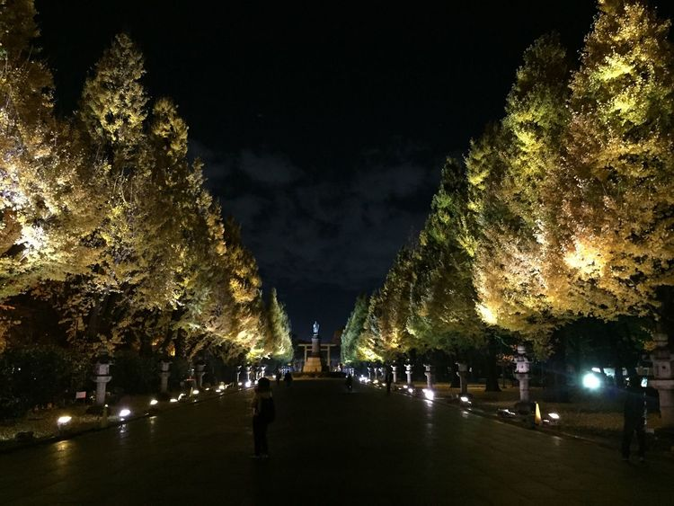 靖国神社 紅葉 ライトアップ Night Lights Sightseeing Yellow Autumn Night