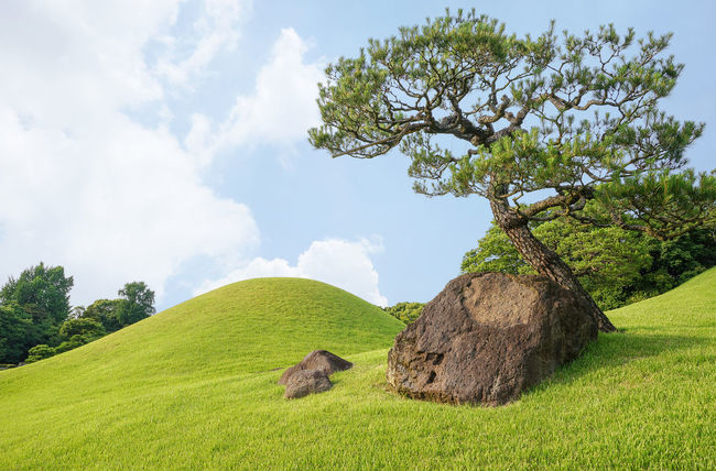Bonzai Nature Rock Summer Views Tranquility Beauty In Nature Cloud - Sky Field Grass Grazing Green Color Growth Landscape Mountain Nature No People Outdoors Scenics Skyporn Tranquil Scene Tree