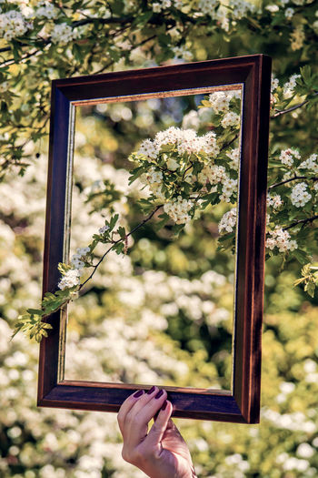 Natural frame Body Part Day Finger Flower Flowering Plant Focus On Foreground Frame Hand Holding Human Body Part Human Hand Leisure Activity Lifestyles Nature One Person Outdoors Personal Perspective Photography Themes Picture Frame Plant Real People Tree Unrecognizable Person