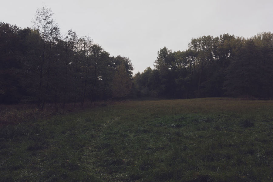 Fey IPhone SE Meadow Nature Nklb No People Outdoors Rêverie Secret Spaces Tranquility