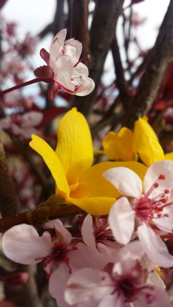 Colorful Flowers Albuquerque Warzone Upclose