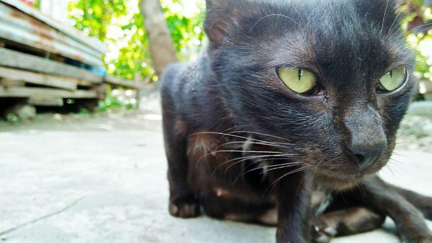 Cat's Eye. Pets Cats 🐱 The Week On EyeEm