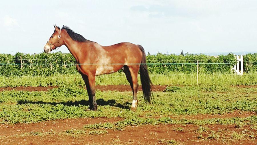 Horses Horseriding Horse