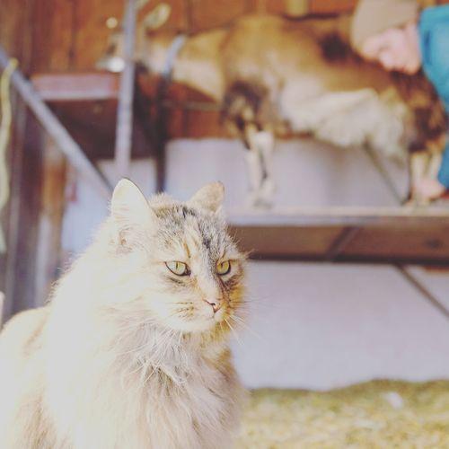 Homegirl milking Bessie. The Cat likes to hang. My Best Photo 2015