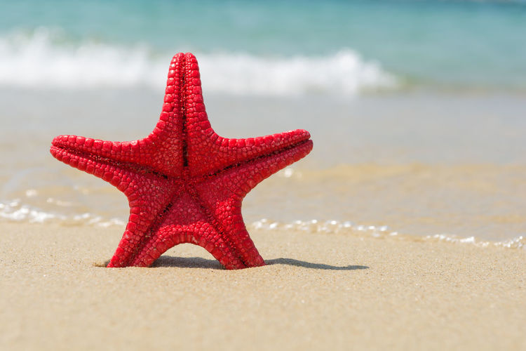 Red starfish on the beach Coastline Copy Space Exotic Freshness Natural Red Seashore Travel Wave Beach Beauty In Nature Close-up Coast Marine Nature Ocean Sand Sea Seaside Simplicity Starfish  Tropical Climate Turquoise Vibrant Water