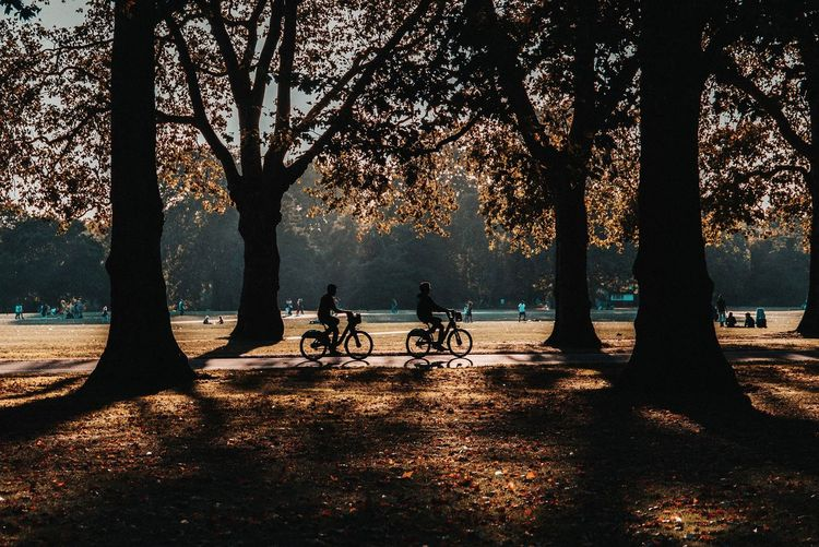 Silhouettes of people riding bicycles in park