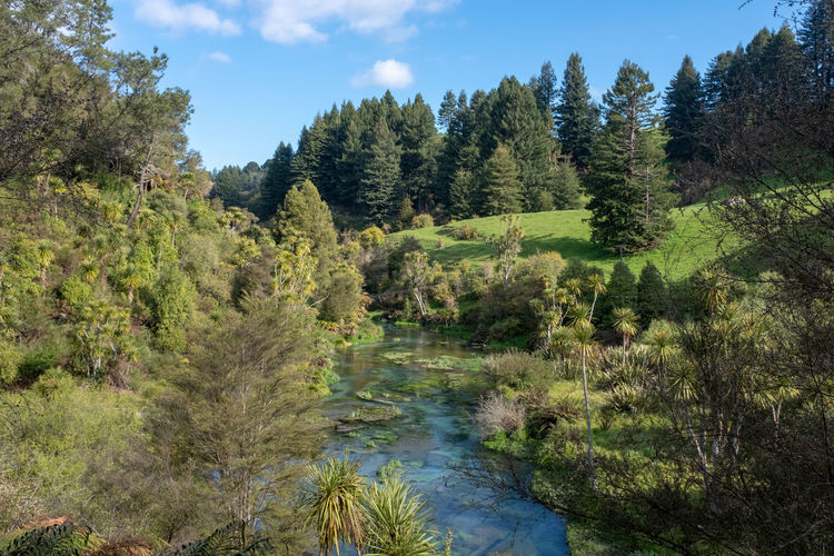 Plant Tree Beauty In Nature Water Growth Nature Scenics - Nature Sky Tranquility Tranquil Scene Day Environment Non-urban Scene Land No People Landscape Green Color Outdoors Forest Swamp Spring New Zealand New Zealand Scenery